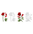 roses hand drawing and colored a blossoming vector image vector image