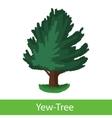 Yew-Tree cartoon icon vector image vector image