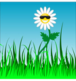 funky camomile vector image vector image