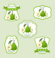 the fruit pear vector image