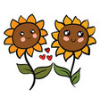 two cute sunflowers in love on white background vector image