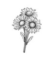 beautiful monochrome black and white daisy vector image vector image