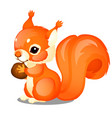 cute animated fluffy squirrel and nut isolated vector image