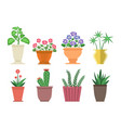 dieffenbachia flowers in pot vector image