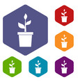 plant in clay pot icons set vector image vector image