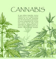 cannabis hand draw poster vector image vector image