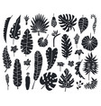 jungle leaves silhouettes exotic palm banana vector image vector image
