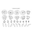 lisianthus flower and leaf hand drawn botanical vector image vector image