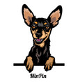 miniature pinscher - dog breed color image vector image vector image