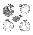 set black and white pomegranates healthy vector image