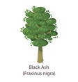 black ash icon flat style vector image vector image
