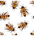 lot detailed realistic honey bees insects on vector image
