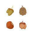 nuts icon set cartoon style vector image