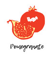 pomegranate isolated fruit vector image vector image