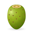 prickly pear isolated vector image