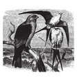 two swallow tail and one mississippi kites vector image vector image