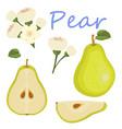 fresh pear icon green pear vector image
