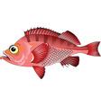 cartoon fish vector image vector image