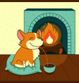 cute smiling dog of welsh corgi drinks hot vector image