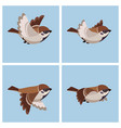 flying tree sparrow animation sprite sheet vector image vector image