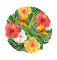 nature flowers cartoon vector image vector image