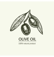 Olive Hand Draw Sketch vector image vector image