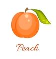 Orange peach icon vector image