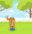 cute dog eating dog food on lawn in backyard on vector image