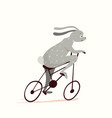 cute little bunny cycling riding bicycle funny vector image vector image