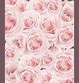 delicate roses pattern background floral vector image vector image