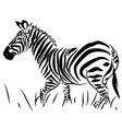 Full Body Zebra vector image