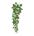 ivy branch icon greenery home decoration and vector image vector image