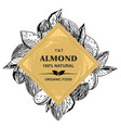 almonds hand drawn sketches in vintage vector image vector image