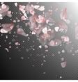 Sakura petals on white background EPS 10 vector image