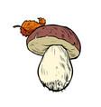 white mushroom boletus vector image vector image