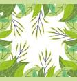 herbs foliage leaves vegetation wild botany vector image