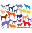 set of colorful dogs silhouettes-4 vector image vector image