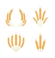 Wreaths of wheat ears vector image