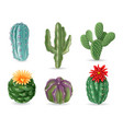 realistic cactuses decorative desert exotic vector image