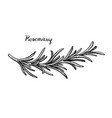 Rosemary branch sketch