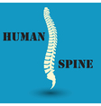 silhouette of a human spine vector image vector image