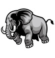 charging elephant vector image vector image
