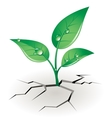 Growth sprout vector image