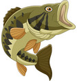cartoon bass fish isolated on white background vector image vector image