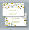 chamomile flower banners vector image vector image