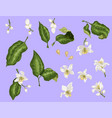 citrus branches set with flowers and leaves vector image vector image