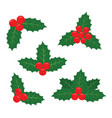 holly plant a set of vector image