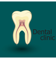 Human tooth emblem vector image vector image