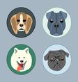 Dogs set flat style Husky rottweiler taxa victoria vector image