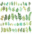 drawing green leaves vector image vector image